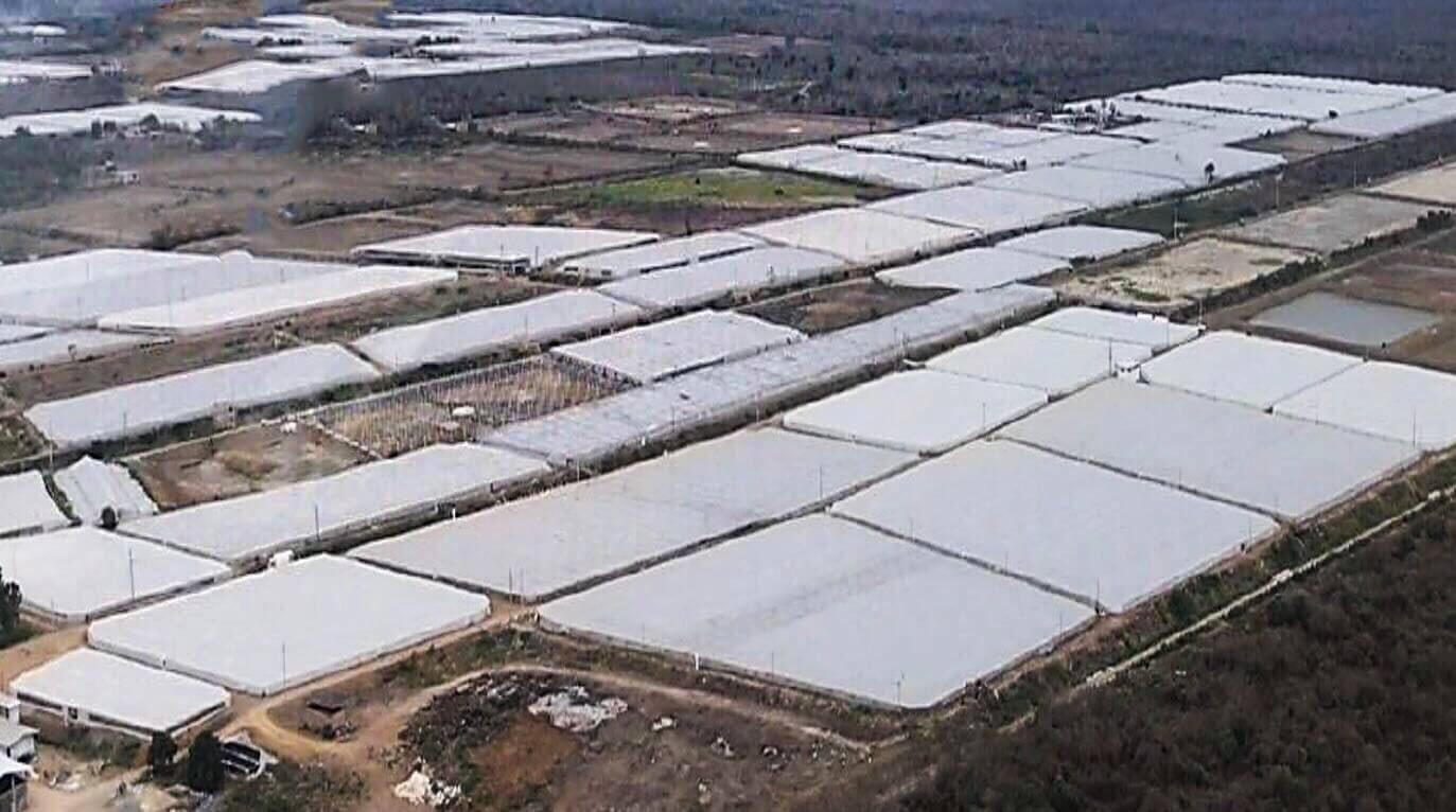 diseños de cultivo intensivo para la crianza del camarón marino con agua de pozo en zonas tierra adentro en Ecuador.